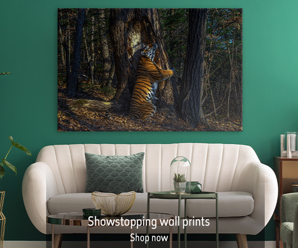 The Embrace print hangs on the wall above a cream sofa with green accessories. The text reads 'Showstopping wall prints. Shop now'.