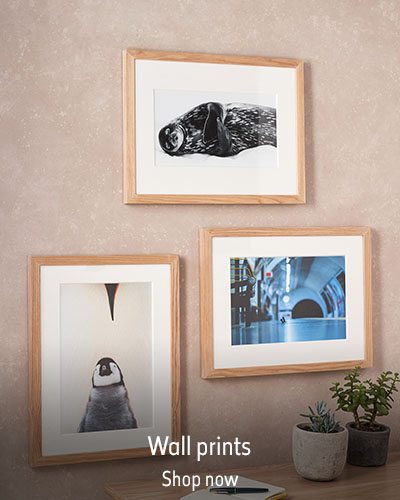 Three Wildlife Photographer of the Year prints hang on the wall above a table with two pot plants. The text reads 'Wall prints. Shop now.'