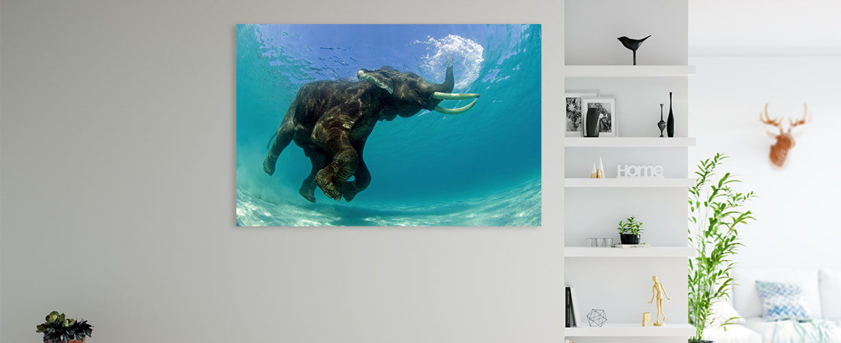 Rajan Snorkelling canvas hangs on the wall of a modern living room